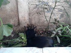 Una foto encontrada de Allen de pequeñito, con complejo de planta,  notar que la planta a su costado izquierdo le ha servido de alimento...  (las orejas con poquito pelo, desde siempre... )