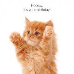 Ginger Kitten Birthday Card Hooray It's Your Birthday!, Cat Greeting Card NEW Happy Birthday Kitten, Cat Birthday Wishes, Happy Birthday Animals, Happy Birthday Pictures, Rude Birthday Cards, Happy Birthday Funny, Happy Birthday Quotes, Animal Birthday, Birthday Greetings