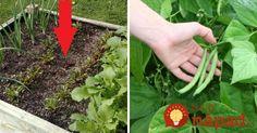 Nie sú dobrými susedmi: Tieto rastliny v záhrade rozhodne nesaďte vedľa seba, navzájom si škodia! Herbs, Gardening, Vegetables, Plants, Sweet, Composters, Garten, Herb, Vegetable Recipes