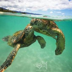 Sea Turtle affection