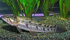Home Aquarium, Tropical Aquarium, Aquarium Fish, Aquatic Ecosystem, Monster Fishing, Angler Fish, Exotic Fish, Cichlids, Freshwater Fish