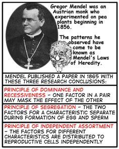 #Mendel's Laws