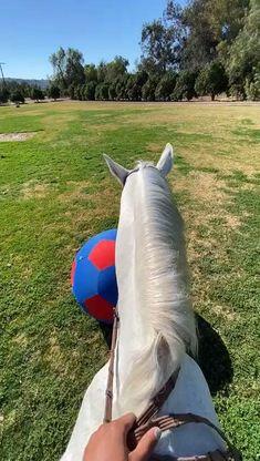 Sabrina Carpenter, Horse Tack, Horseback Riding, Horses, Outdoor Decor, Equestrian, Horse, Horse Riding