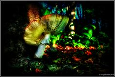 Fantasy Mushroom Trotter, Stuffed Mushrooms, Fantasy, Christmas Ornaments, Pets, Holiday Decor, Photography, Stuff Mushrooms, Photograph