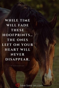 Beautiful Loss of Pet Quotes – Art Of Equitation Horse Poems, Horse Riding Quotes, Horse Sayings, Horse Love Quotes, Pet Loss Quotes, Equine Quotes, Equestrian Quotes, Lost Quotes, Death Quotes