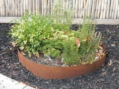 At Chippy's Outdoor, we offer a metal garden edging in Melbourne. Visit us and buy garden edging in Melbourne at cheapest price. Call Now 03 9755 Garden, Landscaping Supplies, Steel Garden Edging, Corten Steel, Raised Garden, Outdoor Gardens Landscaping, Outdoor Gardens, Garden Privacy, Buy Garden
