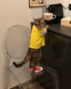 Hey babe, I think u need coffee with a shot of whiskey in it🥃☕️👌🏽 Cat Moments Cute Cats And Kittens, I Love Cats, Crazy Cats, Cool Cats, Cute Funny Animals, Cute Baby Animals, Animals And Pets, Funny Cats, Beautiful Cats