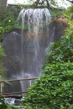 The Waterfall in the Rainforest Biome at the Eden Project, Cornwall. Eden Center, Rainforest Biome, Children Of Eden, Places In Cornwall, Places To Travel, Places To Visit, St Just, Holidays In Cornwall, Eden Project