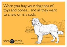 Free, Confession Ecard: When you buy your dog tons of toys and bones.... and all they want to chew on is a sock.