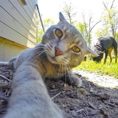 The face you make when people say a cat can't take selfies...  #selfiecat #gopro by yoremahm