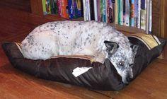 Dottie using her new bed