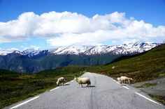 Sheep crossing in Norway, Europe digital photo, Snowy Mountains, Animals, Sky with clouds, Holiday destination, Digital download photography by PrettyDigiDesign on Etsy