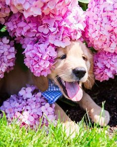 A delight amongst the flowers! This dog just as excited as us that it is finally summer!