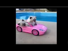 Funny Cats Compilation 2016 Best Funny Cat Videos Ever Funny Cat videos ''Funny Cats Compilation 2016'' - Best Funny Cat Videos Ever | Funny Cat videos By: Funny Cat ================================= ''Funny Cats Compilation 2016'' funny cat videos try not to laugh or grin funny cat videos that will make you laugh so hard you cry funny cat videos 2016funny cat videos for kids funny cat videos in water funny cat videos 2015funny cat videos try not to laugh funny cat videos clean funny cat…