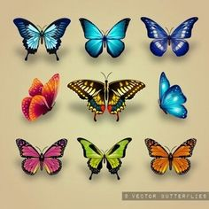 Excellent collection of butterflies Vector 3d Butterfly Tattoo, Butterfly Drawing, Butterfly Painting, Butterfly Crafts, Butterfly Wings, Art Papillon, Butterfly Pictures, Paper Quilling, Beautiful Butterflies