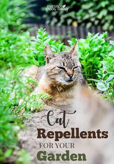 Best Cat Repellent Plants and Natural Deterrents for Your Garden - Do you have cats in your garden that ruin your plants and use it as a litter box? Traditional methods do no good because well cats can jump over a fence or up into a … Natural Cat Repellant, Cat Repellant Garden, Cat Repellant Outdoor, Plants That Repel Cats, Cat Plants, Cat Garden, Garden Pests, Garden Bed, Gardens