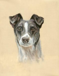 Peggy, little dog with three paws - soft pastels 30x40 cm