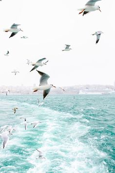 Seagulls flying over aqua waves. Life at the beach. Travel Photography Tumblr, Nature Photography, Photography Tips, Adventure Photography, Image Nature, Beach Aesthetic, Belle Photo, Beautiful World, Beautiful Ocean