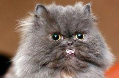 Underbite Cat 2