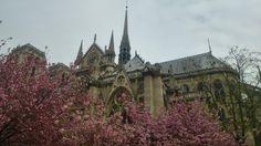 Notre Dame de Paris http://imgur.com/a/kjvAu