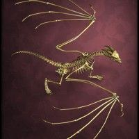 The Bone Dragon in Animals and Creatures, Fantasy, Dragons, 3D Models by Daz 3D