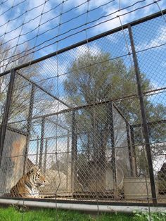 ALDF takes on squalid Cricket Hollow zoo