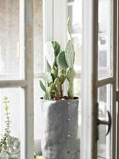 10x cactussen in huis