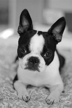 Cute face | Tereza Jancikova | Flickr