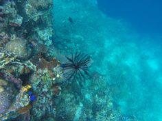 Underwater view in Sangalaki Island borneo indonesia