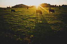 Sunrise at the farm