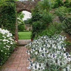 Impressive moonlight stalks of Eryngium giganteum ' Miss Willmott's Ghost' haunt Vita Sackville-West's garden at Sussinghurst castle. Get the 101 on Sea Holly on GD today. @kendrapagewilson #gardenista101 #seaholly