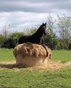 MeWe: The best chat & group app with privacy you trust. Funny Horse Memes, Funny Horse Pictures, Funny Horses, Cute Horses, Horse Photos, Pretty Horses, Cute Animal Pictures, Horse Love, Beautiful Horses