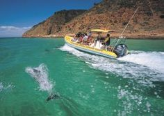 Dolphins at Kangaroo Island with Andrew, our great friend. Amazing Destinations, Holiday Destinations, Adelaide South Australia, Relaxing Holidays, Kangaroo Island, Dc Travel, Galapagos Islands, Water Activities, Great Friends