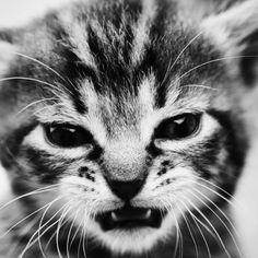 this kitten likes to eat unicorns & boys