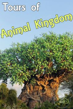 All the info you need on the tours at Animal Kingdom at Walt Disney World