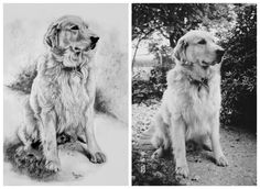 Dog Art, Horse Art & Other Pet Portraits Sketched By Hand in Graphite Pencil Done Working From Your Photos by Pet Artist Genevieve Schlueter. Professional & Reputable