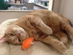 Daisy and her orange mouse boarded with us recently. Both seemed to enjoy their vacation! (May 19, 2014)