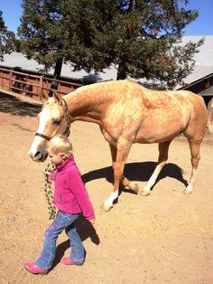 HORSES  !!! Love a palomino