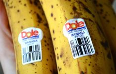 Určitě jste si alespoň jednou v životě všimli nálepky na banánu, ale přemýšleli jste nad tím, jakou informaci obsahuje?