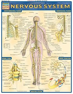 Nervous System (Quickstudy: Academic) by Inc. BarCharts https://www.amazon.com/dp/1572224983/ref=cm_sw_r_pi_dp_x_3AHcybKD1521P