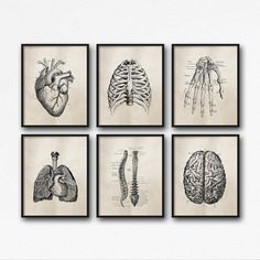 Set of Six Art Prints - Science Anatomy Wall Art, Neutral Tan Brown, Vintage Style, Medical Student Gift, Doctor's Office Decor - DIY Wall Decor to Decorate Your Space Student Room, Student Gifts, Student Office, Education Office, Art Illustration Vintage, Medical Illustration, Doctors Office Decor, Medical Office Decor, Doctor Office