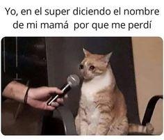 Reposted from - I love sad cat memes . Relatable Tweets, Funny Tweets, Dark Memes, Edgy Memes, Dankest Memes, Funny Memes, Memes Amor, Funny Shit, Funny Stuff