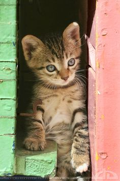"""""""There is no more intrepid an explorer than a kitten."""" --Jules Champfleury"""