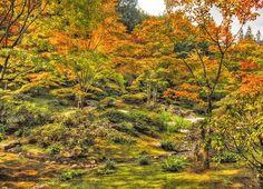 http://media-cdn.tripadvisor.com/media/photo-s/04/97/9e/86/japanese-garden.jpg
