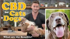 CBD Oil for Dogs Cats Pets What are the Benefits? Treating Anxiety Pain Inflammation S Types Of Anxiety Disorders, Social Anxiety Disorder, How To Treat Anxiety, Deal With Anxiety, Endocannabinoid System, Oils For Dogs, Anxiety Panic Attacks, Seizures, Medical Prescription