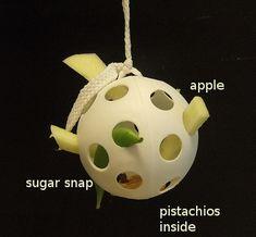 DIY Macaw Toys | Free & DIY Bird Toys / Wiffle Ball Forager