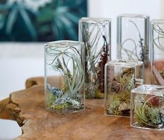 how to water air plants how to display air plant cube containers