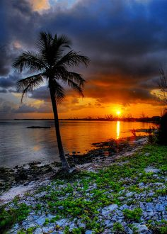 Palm sunset, Grand Cayman Island - by slack12