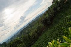 Magical Coffee Cultural Landscape by Maurogo  on 500px