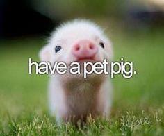 have a pet pig before i die!